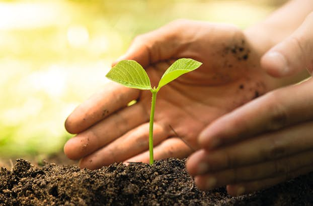 Hand Pflanze RVB Internet